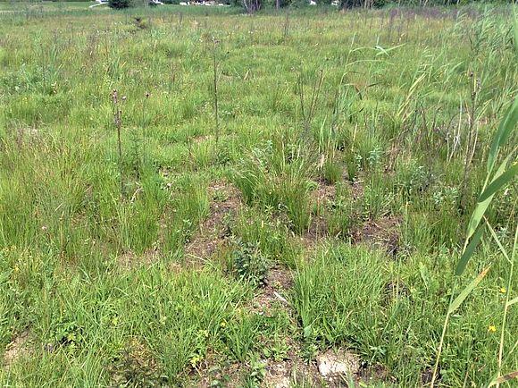 Verpflanzte Streuwiese