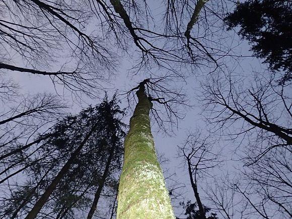 Zum Wohle des Waldes