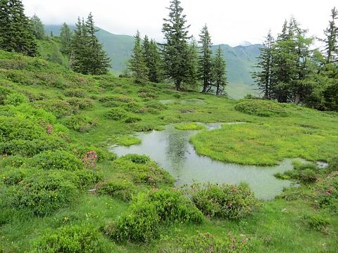 Biotope und Rauhfußhuhn-Lebensräume